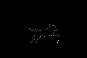 Save Them Wild Dogs Logo_Final